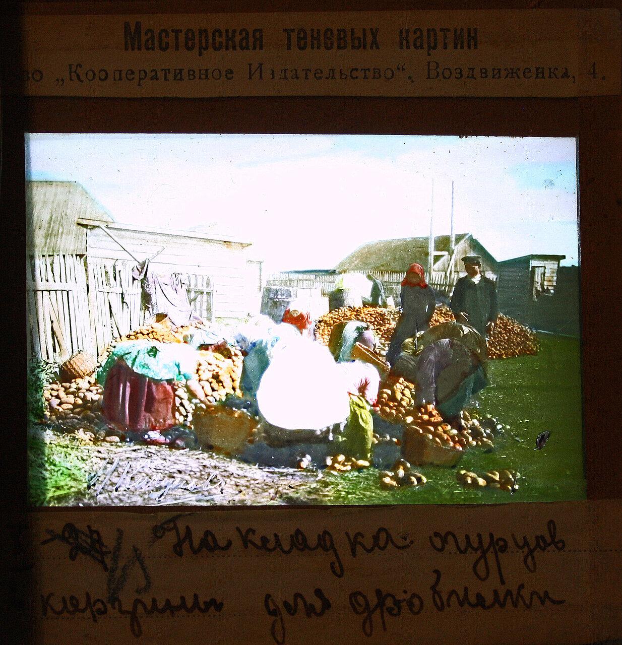 Накладка огурцов в корзины для дробилки