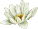 ial_fl_sf_waterlily.png