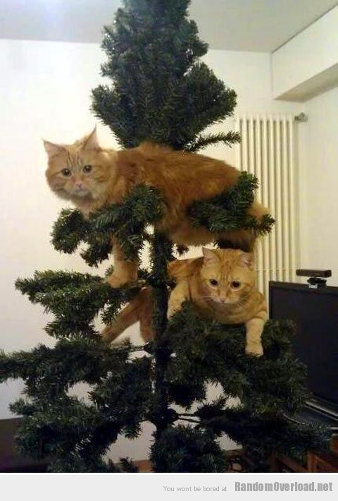 Коты на ёлке - фото 45