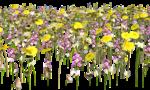 Lug_Grass_Flower (21).png