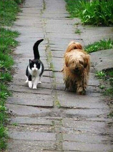 Кот и щенок - два лучших друга