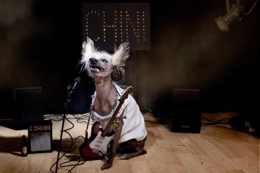 Проект «Чини». Фотографии китайской хохлатой собачки 0 141abc b729f0f6 orig