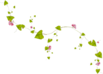 Lilas_Greedy-Pink_elmt (67).png