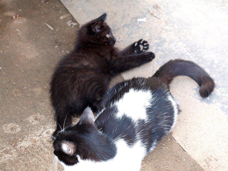 Кошки и котята спасателей P4281375.jpg