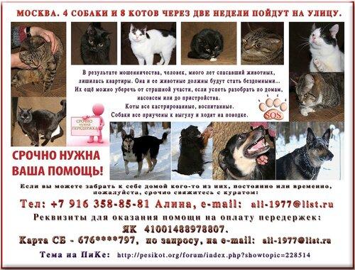 Москва. 4-ре собаки и 8-мь котов рискуют оказаться на улице!…