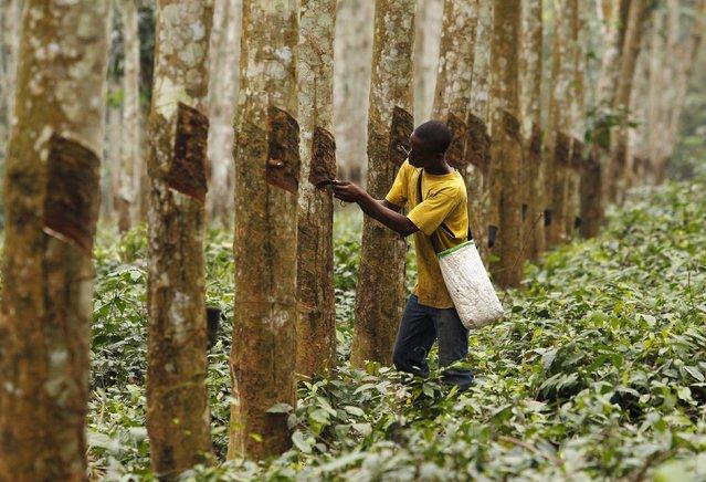 Rubber Factory in Cote d'Ivoire