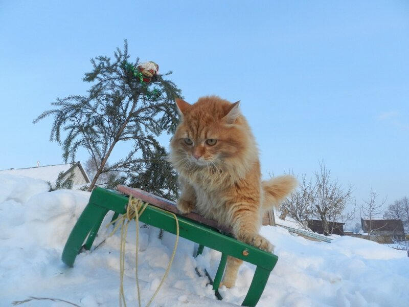 Ах мамочка, на саночках, катались мы зимой.