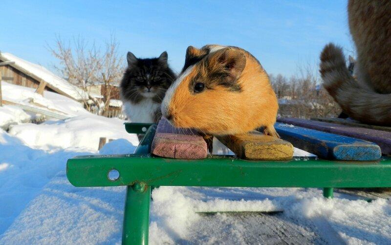 Трикошка и Три кошки