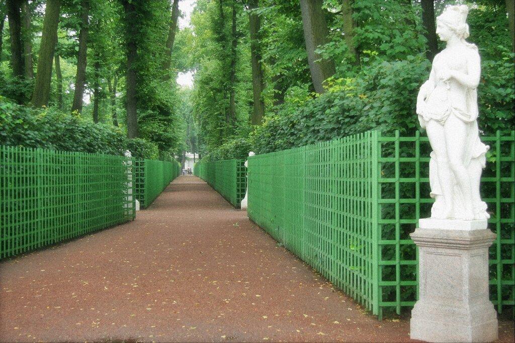 Шпалеры вдоль аллеи Летнего сада