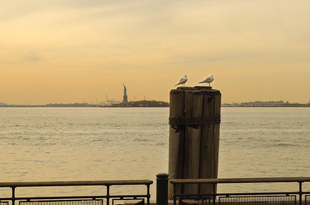 Свободные чайки в свободной стране. Фотоохота на кропнутую зеркалку Nikon D5100 KIT 18-55mm.
