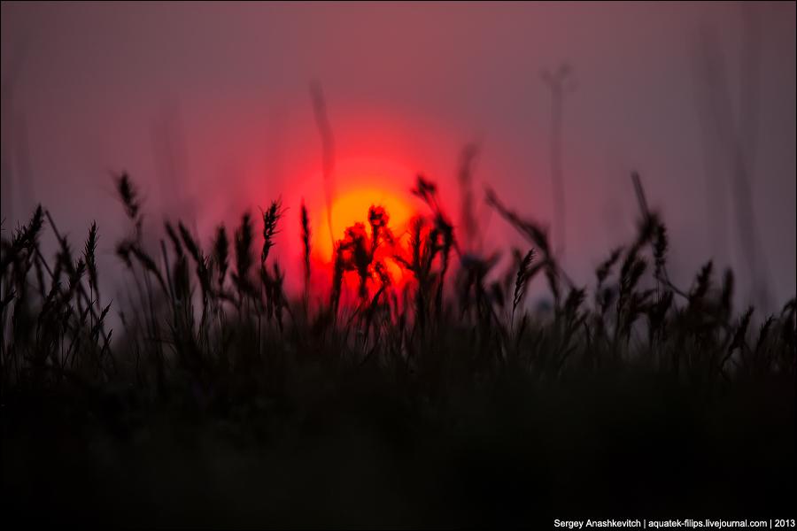 Закат и травы Опука