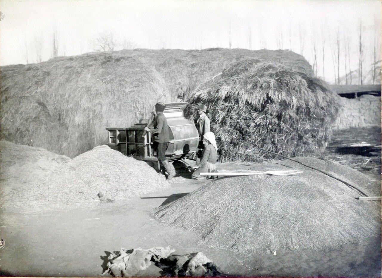 Веяние пшеницы механической веялкой. 1904