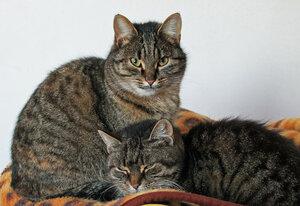 просто кошки