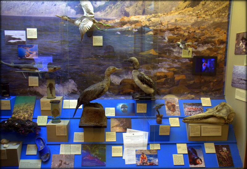 Государственный биологический музей имени К. А. Тимирязева в Москве (Экспозиция)