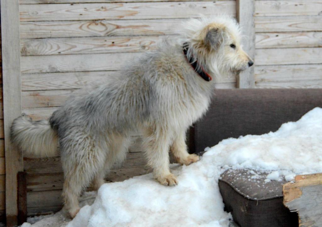 Тапи собака из догпорта