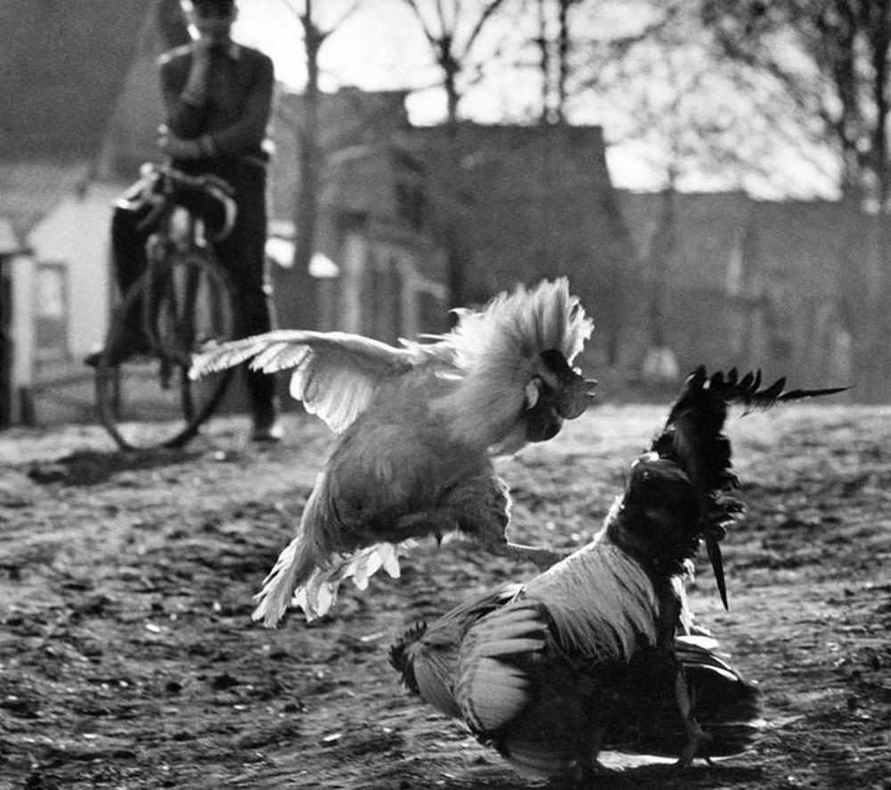 Сергей Васильев, 1-е место, категория «Природа», истории, 1983 год