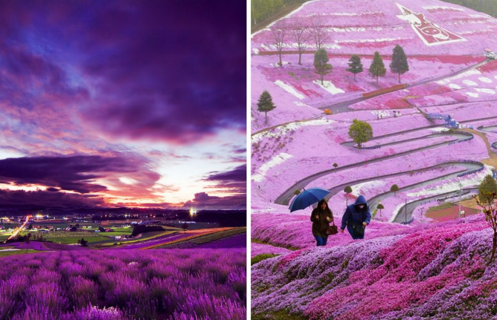Если вам доведется побывать вЯпонии, незабудьте посетить остров Хоккайдо. Здесь перфекционисты япо