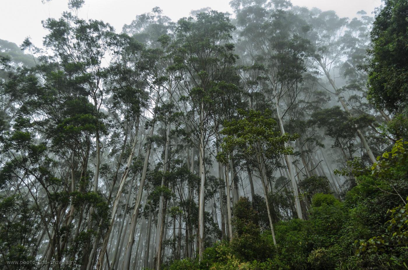 Фотография 13. Тропический лес в национальном парке Хортон Плейнс на Шри-Ланке. Думаю, немногие туристы попадали именно в него. Обычно все идут по тропе через плоскогорье к смотровой площадке