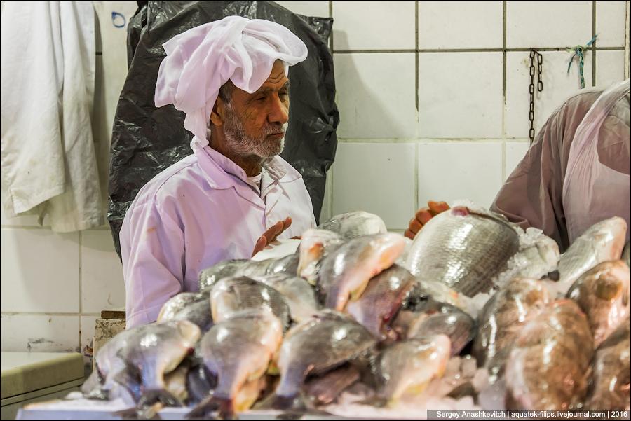 Kuwait Fishmarket / Рыбный рынок в Кувейте