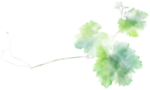NLD Addon Leaf b.png