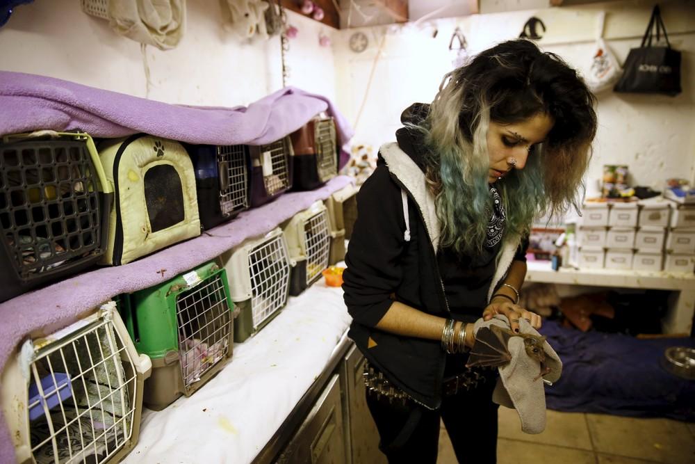 Израильтянка лечит летучих мышей в своем доме