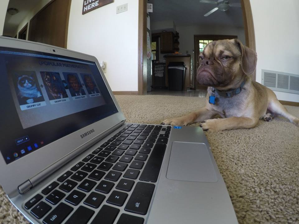 Угрюмый пес покоряет интернет и ваши сердца