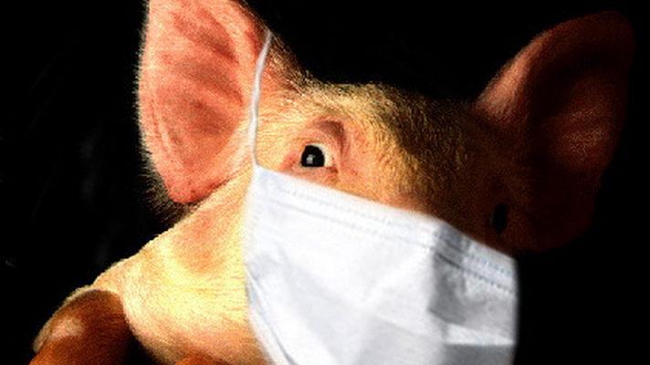 свиной грипп.jpg