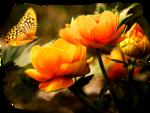 Mariposa_0058.png