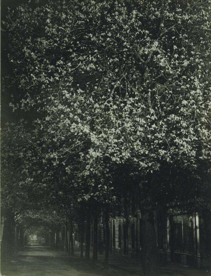 1932. Каштаны