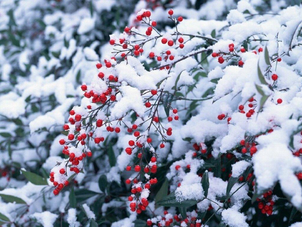 nature_season-winter_06-1920x1440.jpg