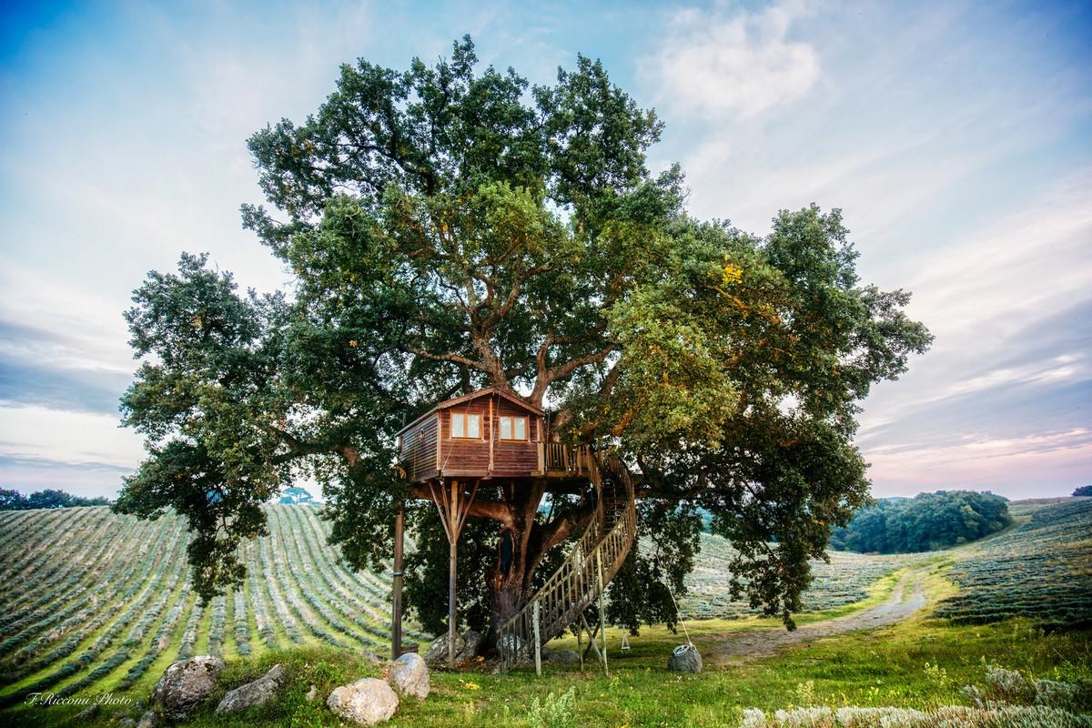 «Домик на дереве» — номер в отеле La Piantata