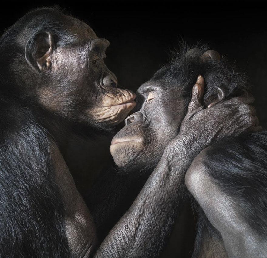 Целующиеся животные