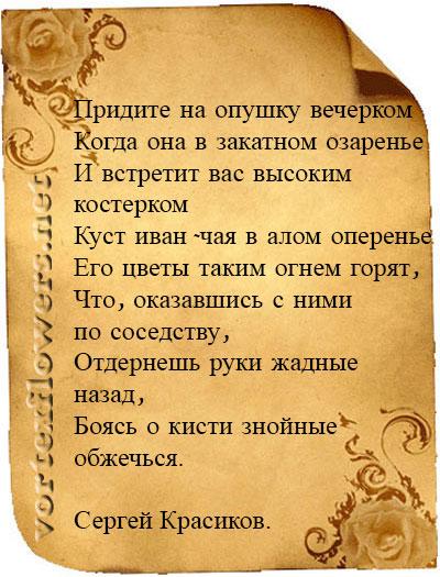 стихи об иван-чае
