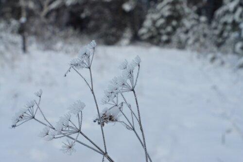 Зима в саду - Страница 5 0_1273e0_1509a4a9_L