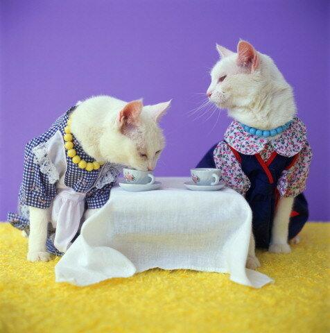 Поздравления с днём кошек 1 марта - Живые открытки для любого праздника в 2021 году