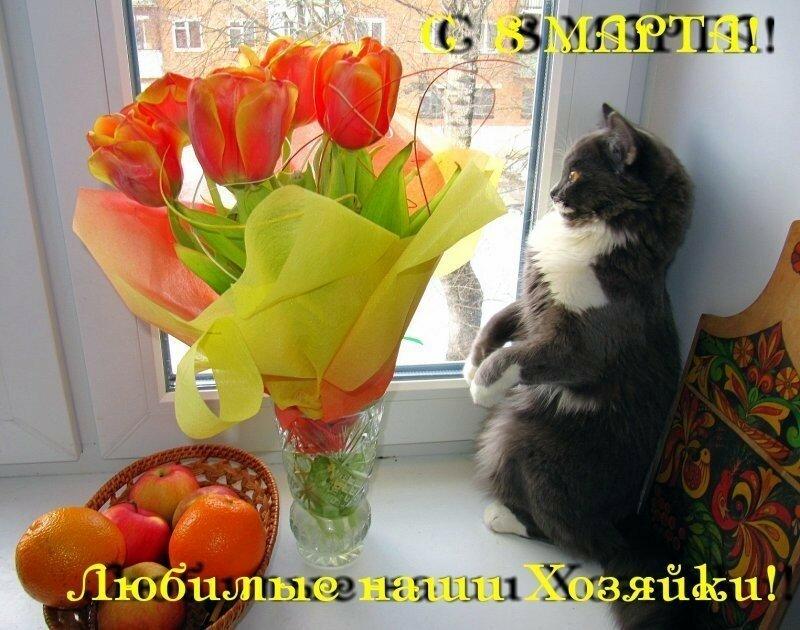 Поздравления от кошек