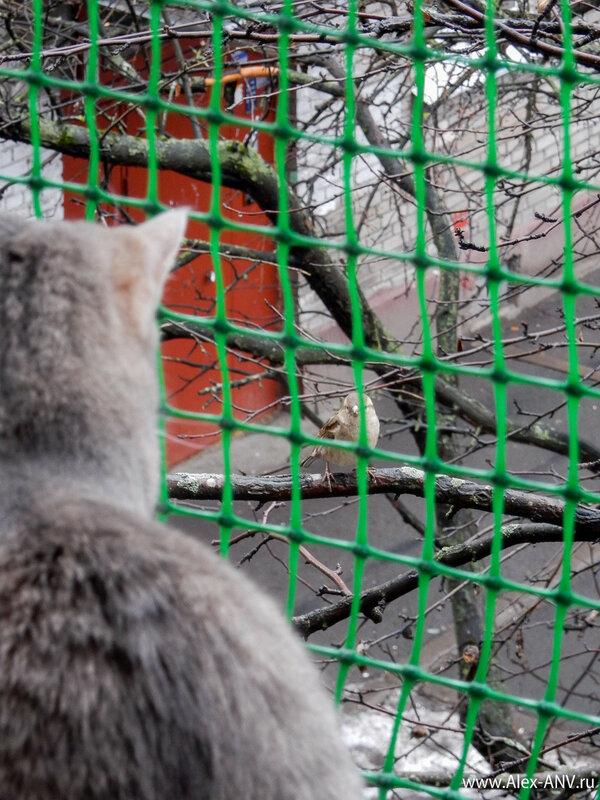 Вот такая мелочь. И ведь близко сидит стервец, а не достать. Кошки даже пытаться не стали.