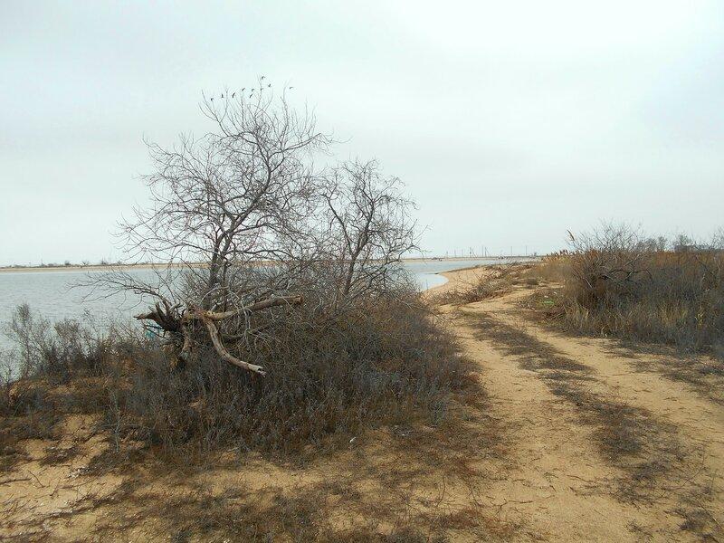 Сочетание берегов и шедевров растительного мира ... DSCN4228.JPG