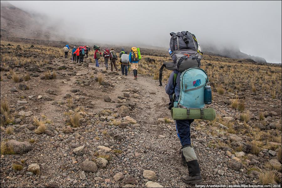 Килиманджарские портеры