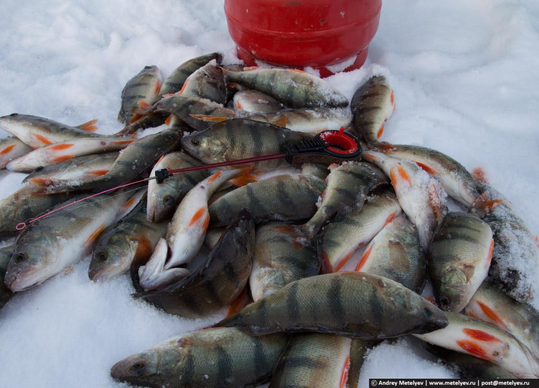отчеты о рыбалке 2017 год апрель