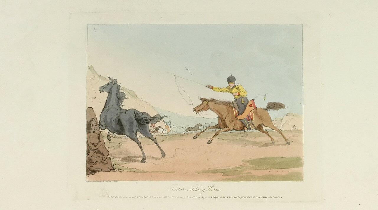 68. Татары ловят своих лошадей