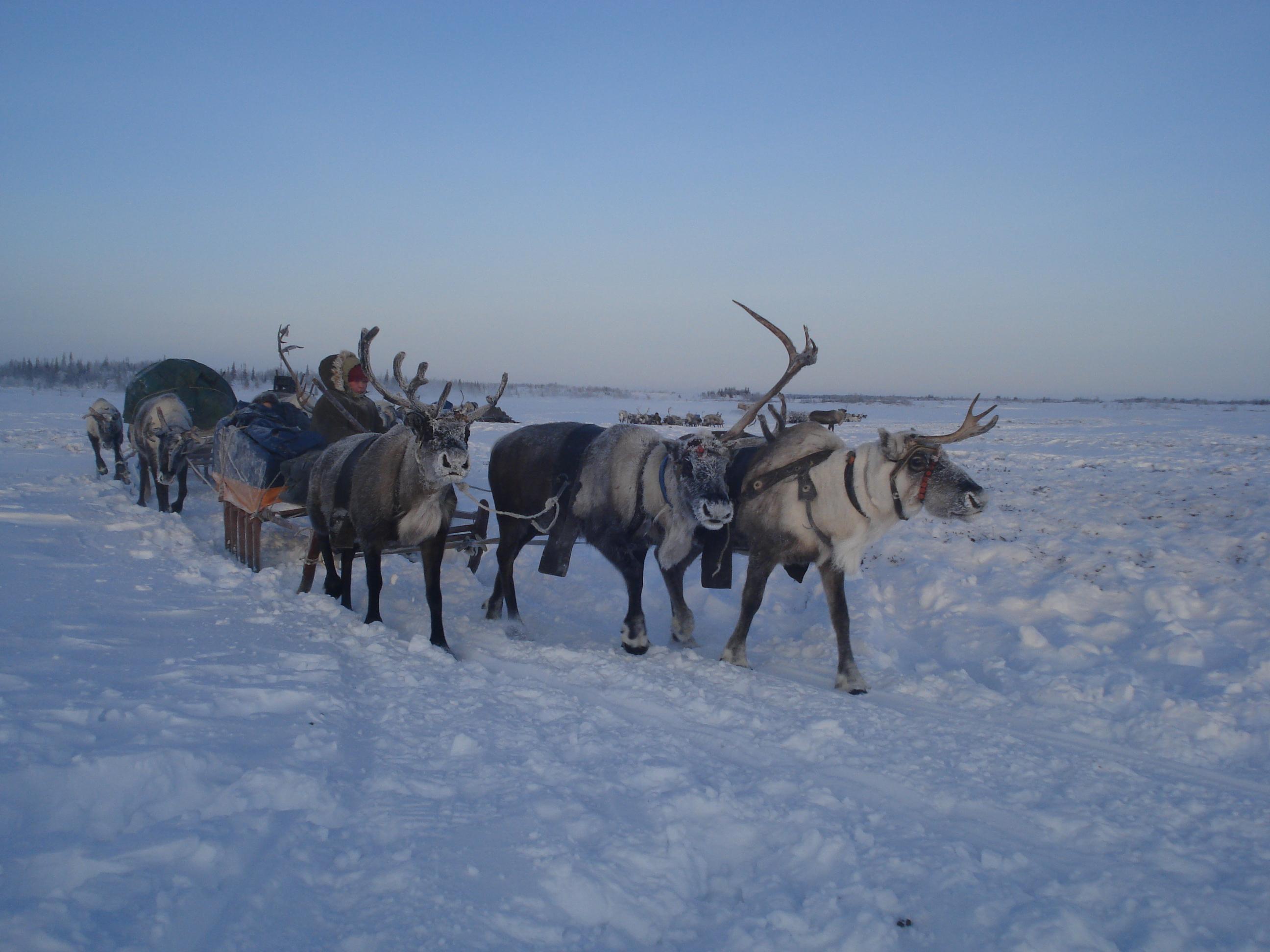 Ненецкий автономный округ начал принимать туристов