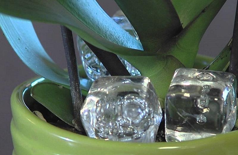 Если ты заметишь, что у нецветущей орхидеи активно растут корни или листья, значит у нее соответ