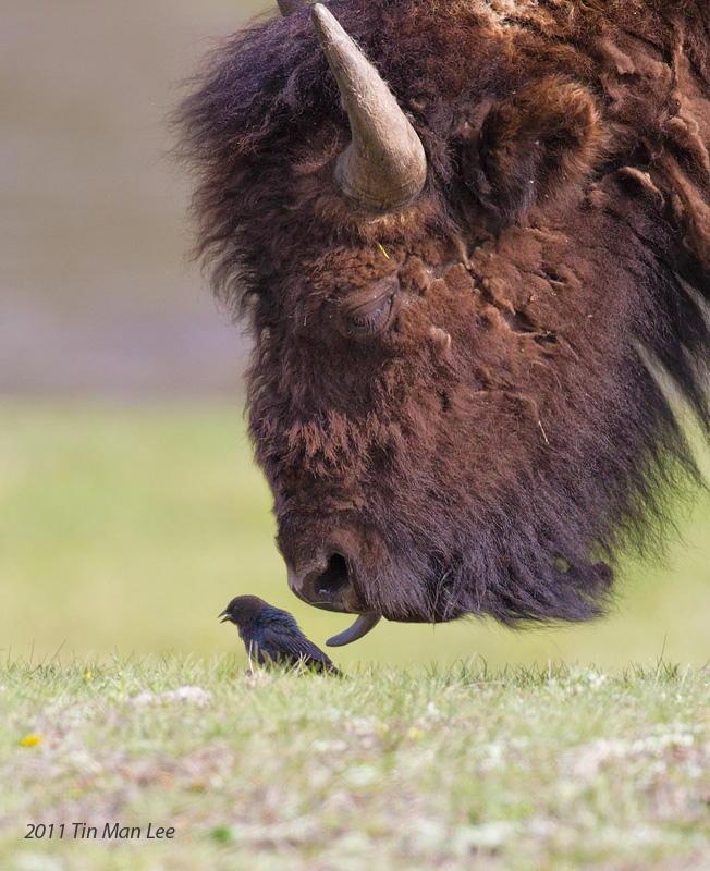 Птичка и зверь. Автор фото: Tin Man