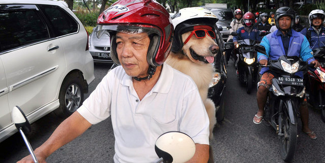 Dog lover Handoko Njotokusumo gets a lot of attention as he rides around the town with Ace, on Janua
