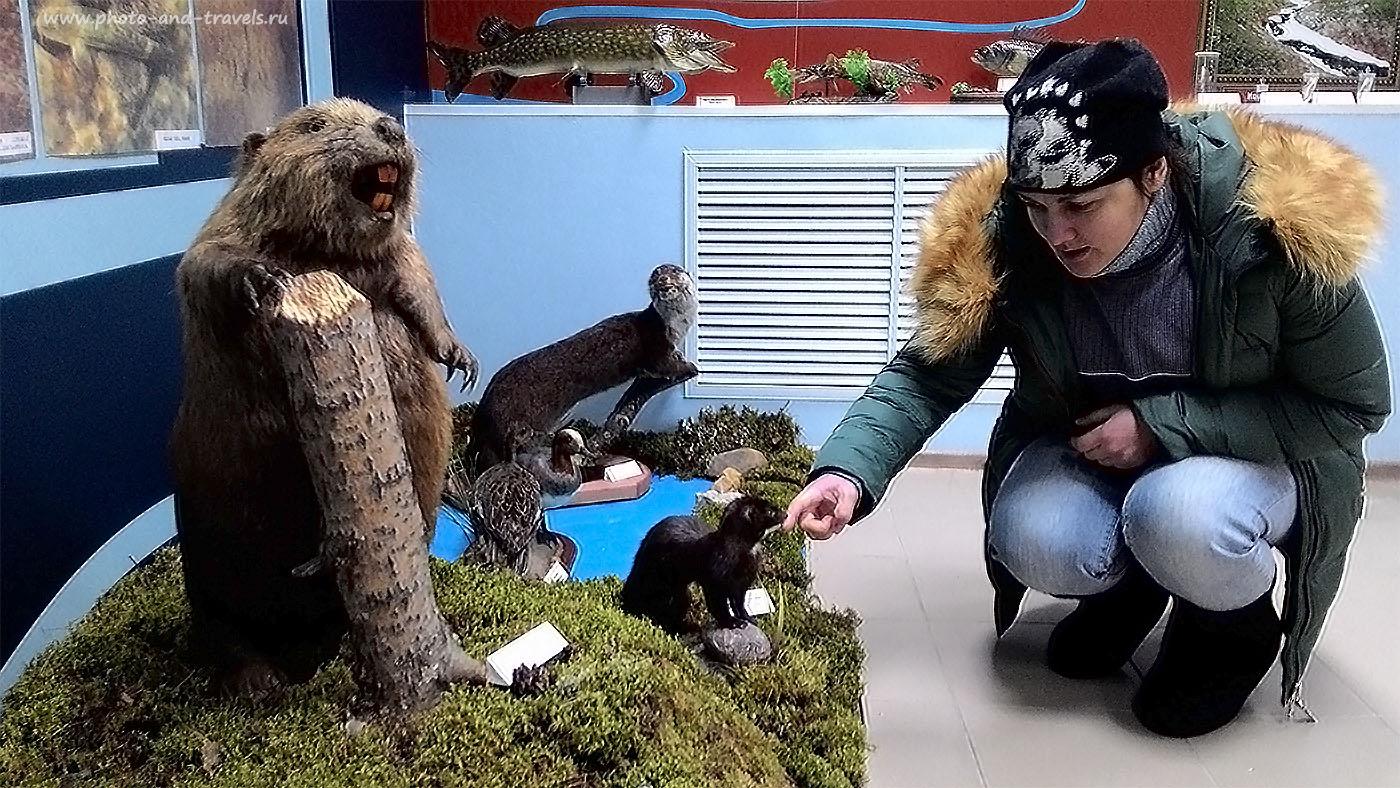 Фотография 14. Экскурсия в Музей природы в Красновишерске. Посетите его между восхождениями на Полюд и камень Ветлан. Снято на смартфон.