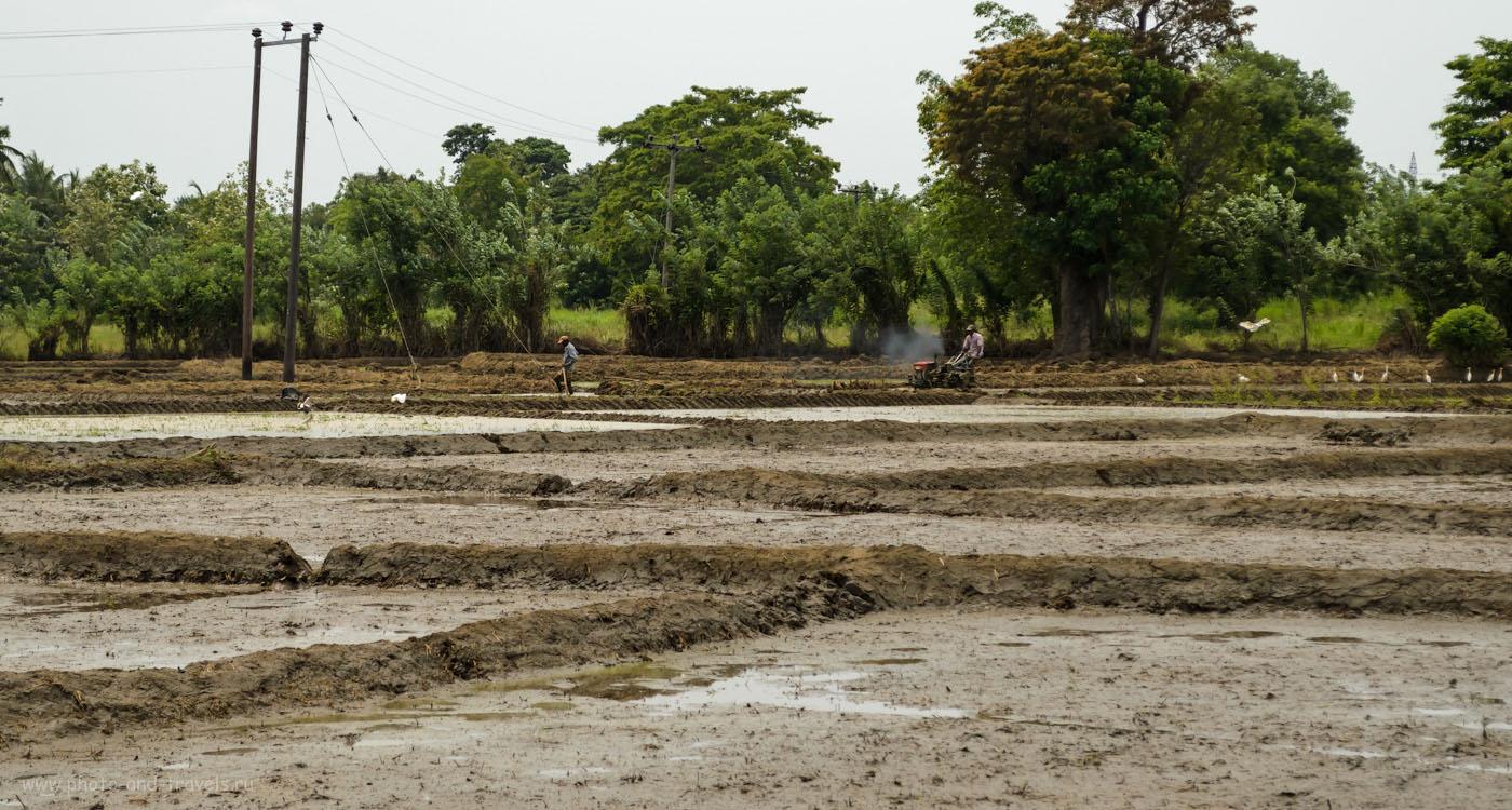 Фотография 3. Обработка рисового поля с помощью трактора на Шри-Ланке. Как мы ездили на экскурсию в Сигирию. 1/1250, 7.1, 400, 55