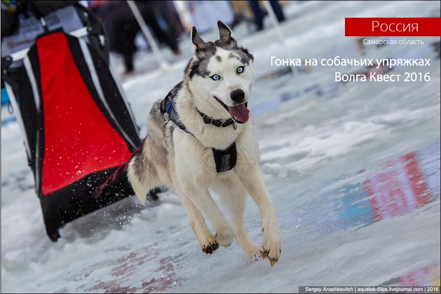 Volga Quest 2016