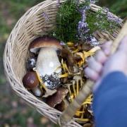 Корзинка с грибами