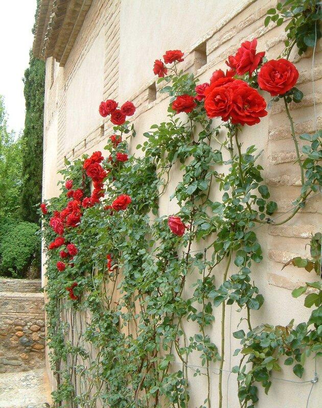 Spain Trip; Granada, Alhambra, Generalife